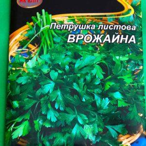 Петрушка листовая урожайная