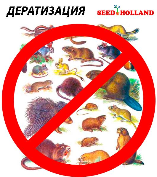 Дератизация-от-вместе-с-seedholland