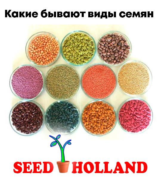 Какие-бывают-виды-семян
