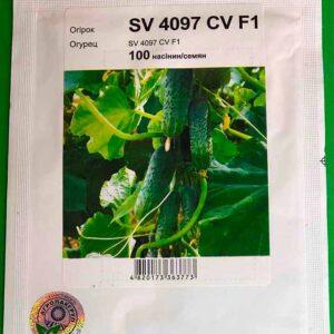 SV 4097 огурец